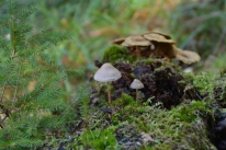 Små svampar