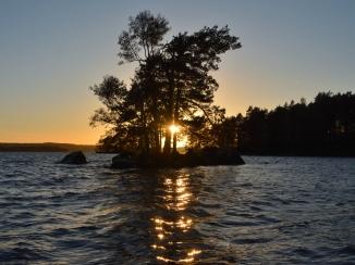 Solen mellan trädstammarna