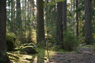 Gammelskogen i Fagersta