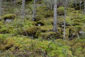 Trollet vid Vargberget