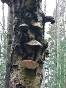 Figur i skogen