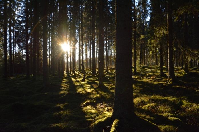 Skogen i Fagersta