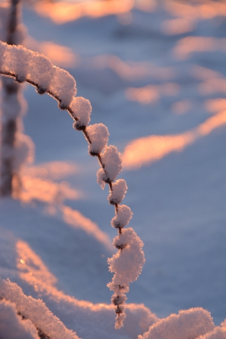 Ett pärlband av snö