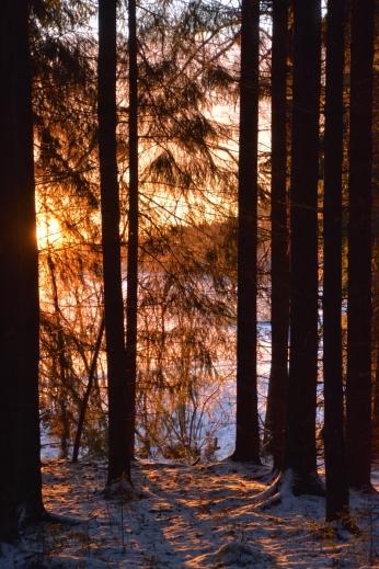 Solljus mellan träden