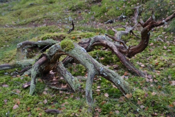 Gymnastik i skogen