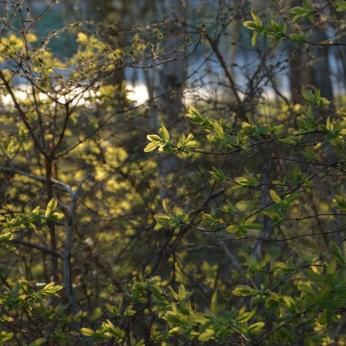 Ljusgrönt i skogen