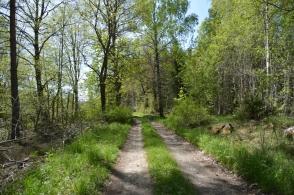 Vårfin skogsväg