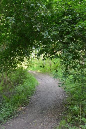 En tunnel av grönt, Linjan, Fagersta