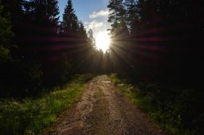 Morgonsol och en fin skogsväg