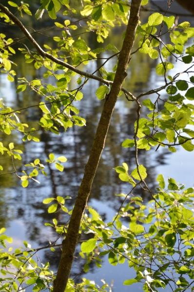 Gröna blad och sjö
