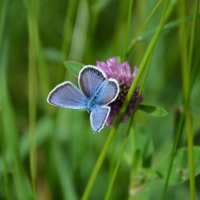 Möten med insekter och fjärilar
