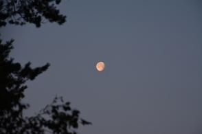 Månen lyser i morgontimmen