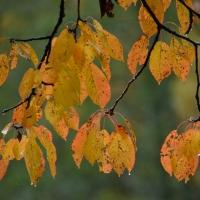 Höstens färgpalett