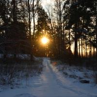 Novembersol och snö