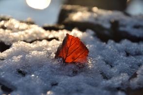 Ett vackert löv i snön