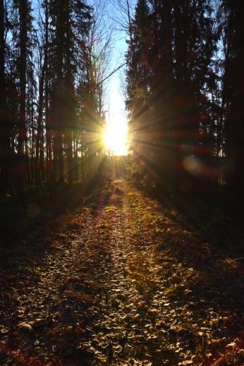 Januari-sol vid Flobostigen