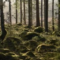Turer i grön Januariskog
