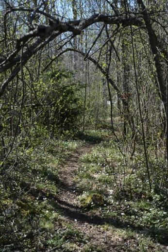 Vårgrön skog