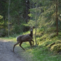 I vårskogen