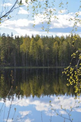 Vårgrönt vid Lilla Älgsjön