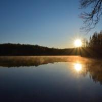 Ensam natt i skogen
