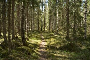 Grön skog längs bruksleden