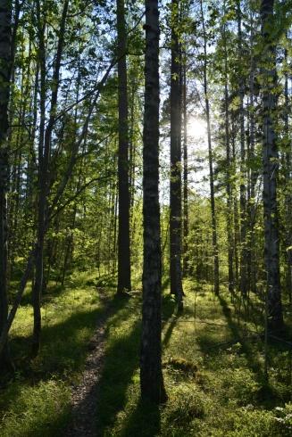 Försommarskogen