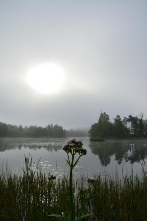 Magisk morgon i Fagersta