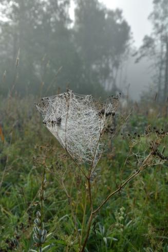 Spindelnät på Floboängen