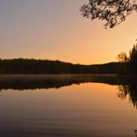 September-natt i skogen