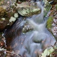 Lärkträd och porlande vatten