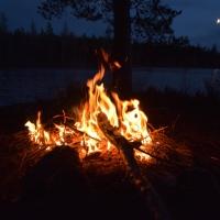 Novembernatt i skogen