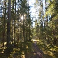I vårvinter-skogen